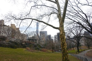 Central Park, Spring 2015