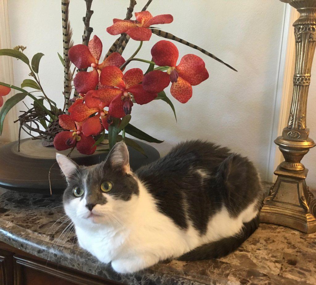 Liliya's cat